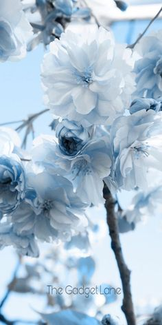 Wallpaper Iphone Pastel – blue flowers … – Famous Last Words Blue Flower Wallpaper, Iphone Background Wallpaper, Aesthetic Iphone Wallpaper, Nature Wallpaper, Aesthetic Wallpapers, Painting Wallpaper, Pastel Wallpaper, Painting Art, Iphone Wallpaper Themes