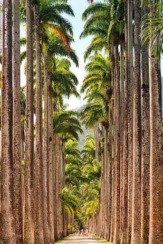 Jardim Botanico Imperial Palms, Rio de Janeiro