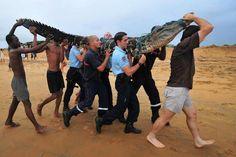 black caïman lost on the beach, Cayenne  amazon rainforest french guiana #amazon more info http://www.braziltravelbeaches.com