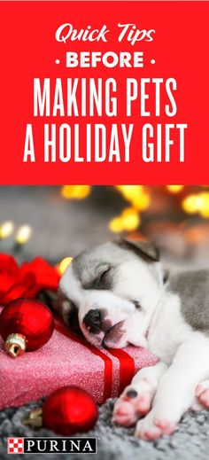 As the holiday season approaches, it can be a time to enjoy with family and friends and of course - a time to give gifts. One of the most meaningful gifts to give and receive is a pet. Though giving a cat or dog can be exciting, it deserves careful preparation. For example, have you thought about the energy level and lifestyle of the recipient? Environment is a key consideration. Find more questions to consider and useful tips from Purina veterinarian Dr. Becker on Purina.com