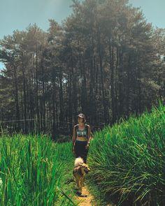 Weekdays adventure with human @g_hanafiah  my fav time when they let my leash off . #trekkingsentul #jakartatrekking #exploresentul #wettraveler #localdog #cutedog #instapet #nature #sun #jungletrekking #ricefield Jakarta, Wood Watch, Trekking, Cute Dogs, Sun, Adventure, Pets, Nature, Travel