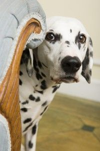 Renting a Home as a Pet Owner