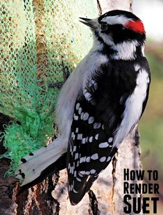 How to Render Suet Easily to Help the Wild Birds