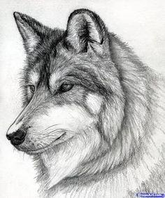 easy drawings of wolves in pencil ile ilgili görsel sonucu