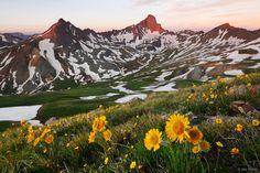 Wetterhorn Peak, Uncompahgre Wilderness, San Juan Mountains, Colorado, sunflowers, sunrise