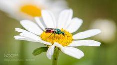 Macro Photography — Chrysididae