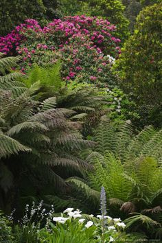 Image detail for -Trebah Garden, nr Falmouth, Cornwall, Great Britain.