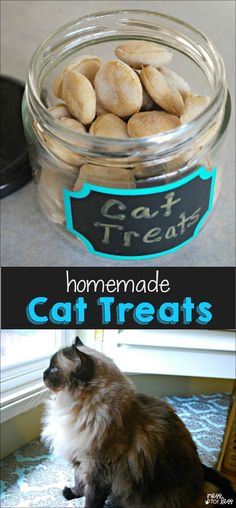 Cat Care Indoors I made these homemade cat treats using just a few ingredients I had in the pantry and my cat gobbled them up! Homemade Cat Food, Homemade Recipe, Diy Stuffed Animals, Pet Care, Puppy Care, Dog Food Recipes, Cat Recipes, Dog Cat, Pug Dogs
