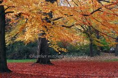 English Gardens, Munich, Germany