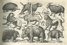 A Book of Four-Footed Beasts-1658-64 - John Overten and Peter Stent