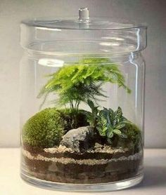 terrario em vaso com tampa fechado