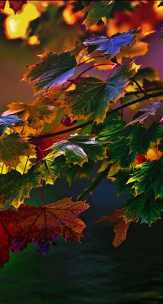 Autumn colors in the forest near Bilzen, Belgium • photo: Chris Pellaers