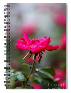 """This x spiral notebook features the artwork """"Refreshed Rose"""" by Mesa Teresita on the cover and includes 120 lined pages for your notes and greatest thoughts. Notebooks For Sale, Lined Page, Fine Art America, Notes, Thoughts, Artwork, Plants, Color, Spiral Notebooks"""