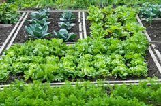 come creare un orto
