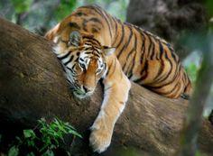 Safari fotográfico en la India