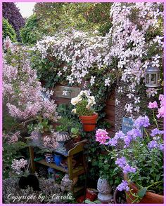 My potting bench corner in May 2009 overflowing with blossoms of clematis alpina, chinese lilac and co.