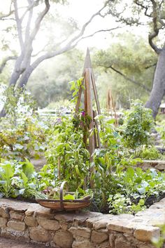 Stone wall potager