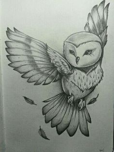 An Owl Drawing.