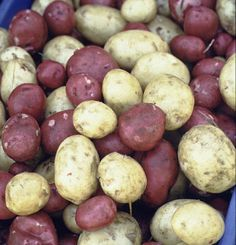 Potatoes: Organic Production and Marketing. This ATTRA publication outlines approaches to organic and sustainable potato production. #ATTRA #Organic #Sustainable #Agriculture