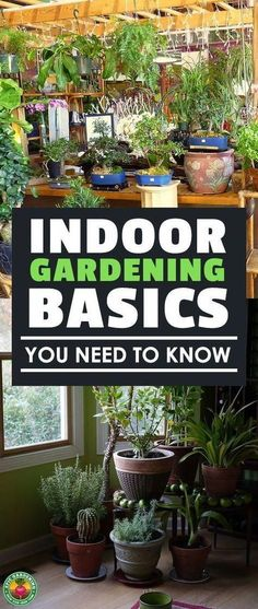 Indoor Gardening For Beginners: Basics You Should Know | Epic Gardening