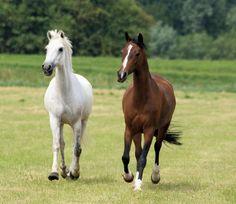 paarden3.jpg (2988×2590)