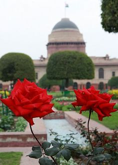 Rashtrapati Bhavan, the Presidential Palace, New Delhi, India. Once a year, the gardens - fragrant - are open to the public.
