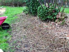 steps to a  back to eden garden