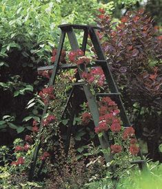 In the garden, try some climbing roses on an old step ladder! Vintage style gardens.  How pretty!