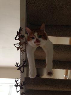 Just hanging around!  #cute #cat
