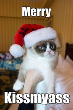 Bah humbug, merry kissmyass, grumpy cat