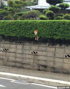 【海外の反応】 パンドラの憂鬱 海外「次は絶対に柴犬を飼う!」 柴犬の可愛すぎる姿が海外で大きな話題に