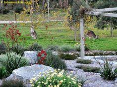 bush garden with kangaroos