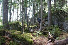 Maine woods magic