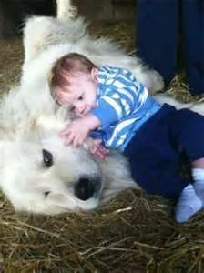 Great Pyrenees and boy - sweet! Pyrenees Puppies, Great Pyrenees Puppy, Pet Dogs, Dogs And Puppies, Huge Dogs, Dogs And Kids, Beautiful Dogs, Mans Best Friend, Dog Pictures