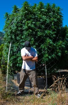 grower with pot plant. Humboldt. photo by Kym Kemp