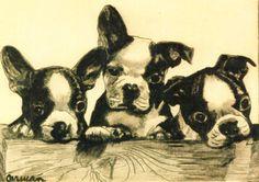 vintage Boston Terriers