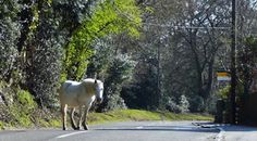 holidays in the New Forest Hampshire England