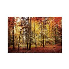 Philippe Sainte-Laudy 'Brilliant Fall Color' Canvas Art, Multi-Colored ($100) ❤ liked on Polyvore featuring home, home decor, wall art, decorative wall art, home décor, unframed wall canvas, canvas home decor, colorful wall art, photo canvas wall art and colorful home decor