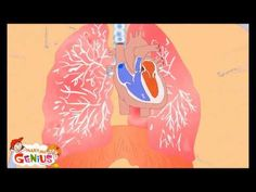 Cardiovascular system Video -Human Body  for Kids