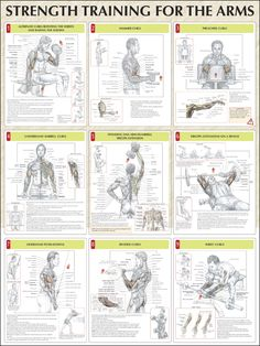 Strength-Training-For-The-Arms-Chart1.jpg 1,125×1,500 pixels