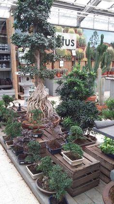 Floralux dadizele belgique for Jardinerie belgique en ligne