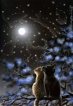 cats looking at the moon