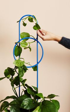 New Ivy Muse botanical wares range inspired by the (The Interiors Addict) Fall Planters, Garden Planters, Hanging Plants, Indoor Plants, Diy Plante, Monstera Deliciosa, Large Plants, House And Home Magazine, Wedding Humor