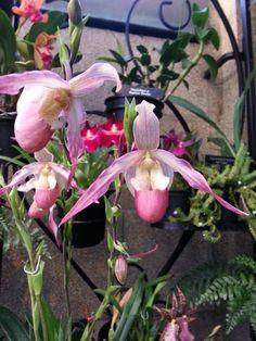 Orchids @ Longwood Gardens