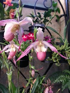 #Orchids @ Longwood Gardens   http://www.roanokemyhomesweethome.com