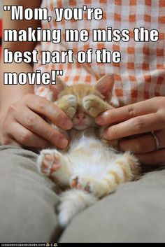 Lolcats - Page 11 - Lolcats n' Funny Cat Pictures - funny cat pictures - Cheezburger