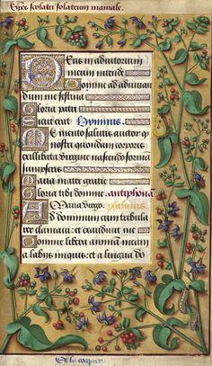 De la cocqueree - Species scolatri / Solanum mamale (Solanum dulcamara L. = morelle douce-amère) -- Grandes Heures d'Anne de Bretagne, BNF, Ms Latin 9474, 1503-1508, f°59r