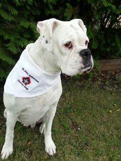 Her warm heart will melt others as shw preforms her duties as a St John Ambulance Therapy Dog.