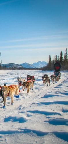This is what Alaska insiders believe to be the ultimate list of quintessential Alaskan adventures--and ones that are easy to make happen. Bahamas Vacation, Bahamas Cruise, Alaska Cruise, Alaska Travel, Alaskan Dog, Alaskan Vacations, Alaska Adventures, Juneau Alaska, Royal Caribbean