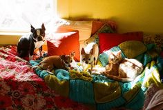we have 4 pets | Flickr - Photo Sharing!